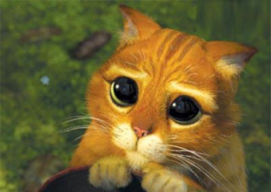 regarderez-vous-le-chat-potte-le-nouveau