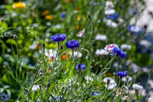 Créer un jardin coloré cet été