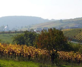 Les différents vins de Bourgogne