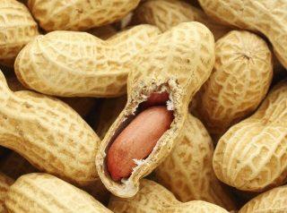 Du nouveau du côté des allergies aux arachides