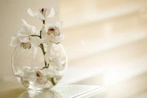 offrir orchidee