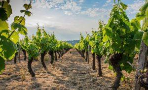 vin macon ige 71960